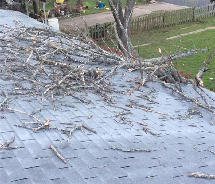 Tree Limbs Fall on Roof in recent Storms